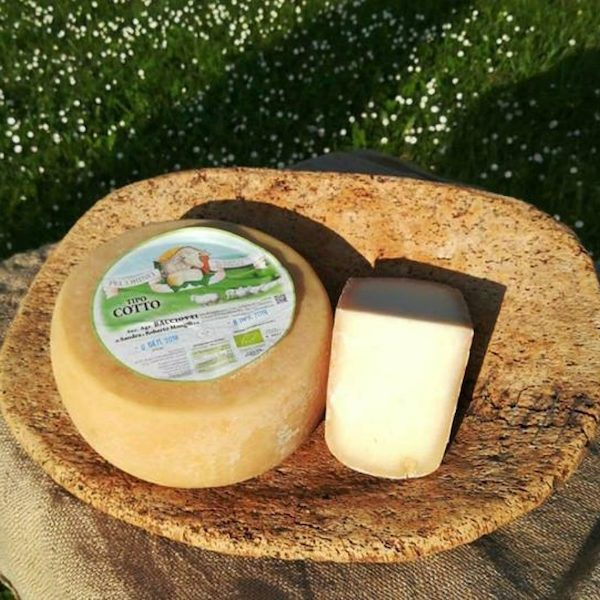 pecorino-biologico-mugello