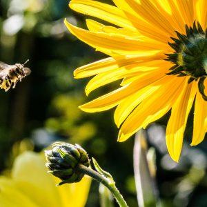 cosa-fare-per-salvare-le-api