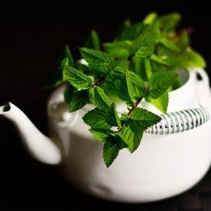 pianta-menta-piperita-aromatiche-bio-firenze