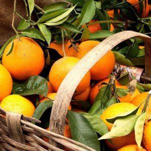 arance-naturali-firenze