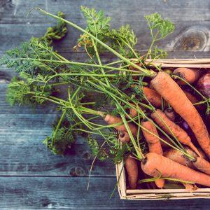 carote bio