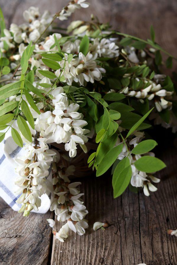 fiori-acacia