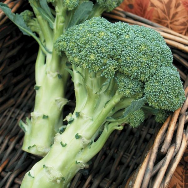 broccoli-biologici