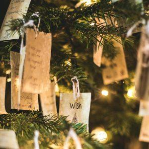 abete-bianco-albero-natale-sostenibile-firenze