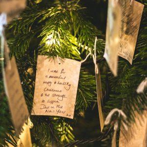 albero-natale-abete-bianco-sostenibile-firenze