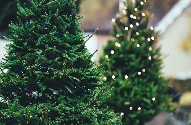 albero-natale-sostenibile-locale