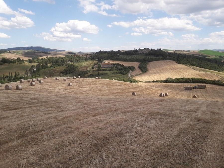 poggio-camporbiano-campi-foraggio