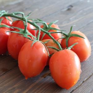 Pomodori-piccadilly-bio-firenze