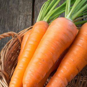 carote-biologiche-toscane