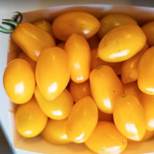 Datterini-gialli-bio-toscana