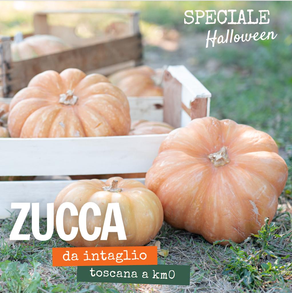 Zucche-halloween-toscane